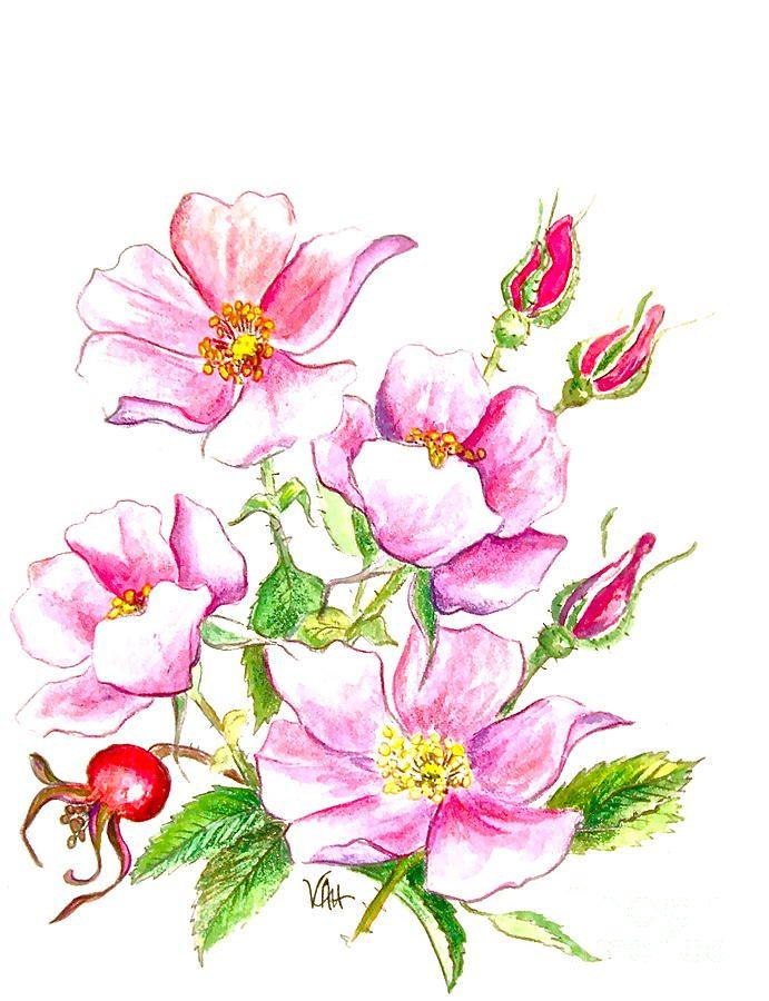 wild-rose-virginia-ann-hemingson.jpg (691×900)