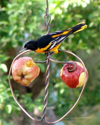 Johnny Apple Feeder.  The best selling fruit feeder from Holland Hill. Holds 2 fruit and gives the birds a place to perch.  #birdfeeder #birdfeeders
