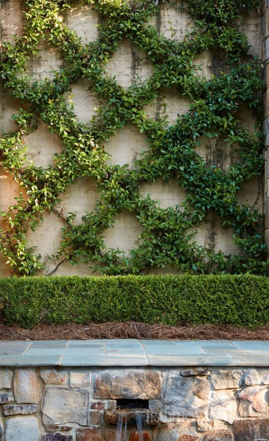 Trellises of espalier cloak the concrete with diamonds of lush green in this Alabama garden. - Photo: Jean Allsopp / Design: Donaldson Landscape & Design