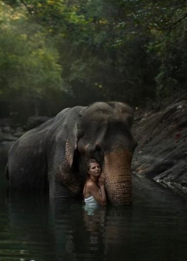 Best Heidi Images On Pinterest Fairytale Africa And - Russian photographer takes enchanting fairytale photos featuring wild animals