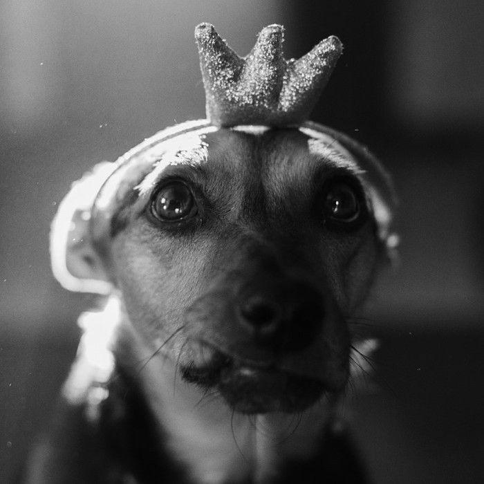 by Aga Rzymek #portrait  #beauty #dog #sweet