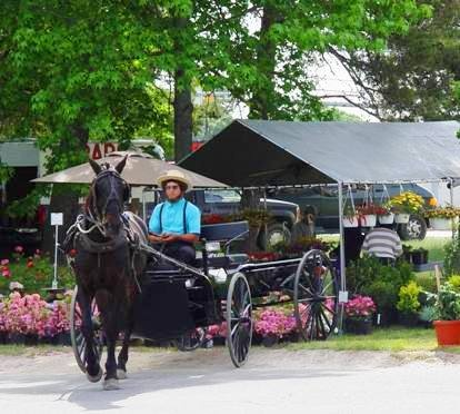 1000 images about Amish in Southern Maryland on Pinterest