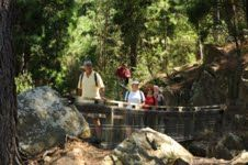 Walkers in the Creswick State Forest, photo by Jade Smithard, Mojo Professional Photography