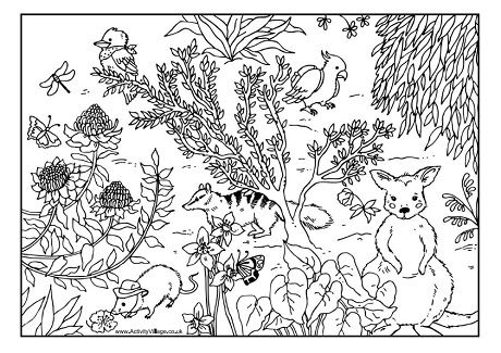 This is a photo of Bewitching Australian Animals Coloring Pages