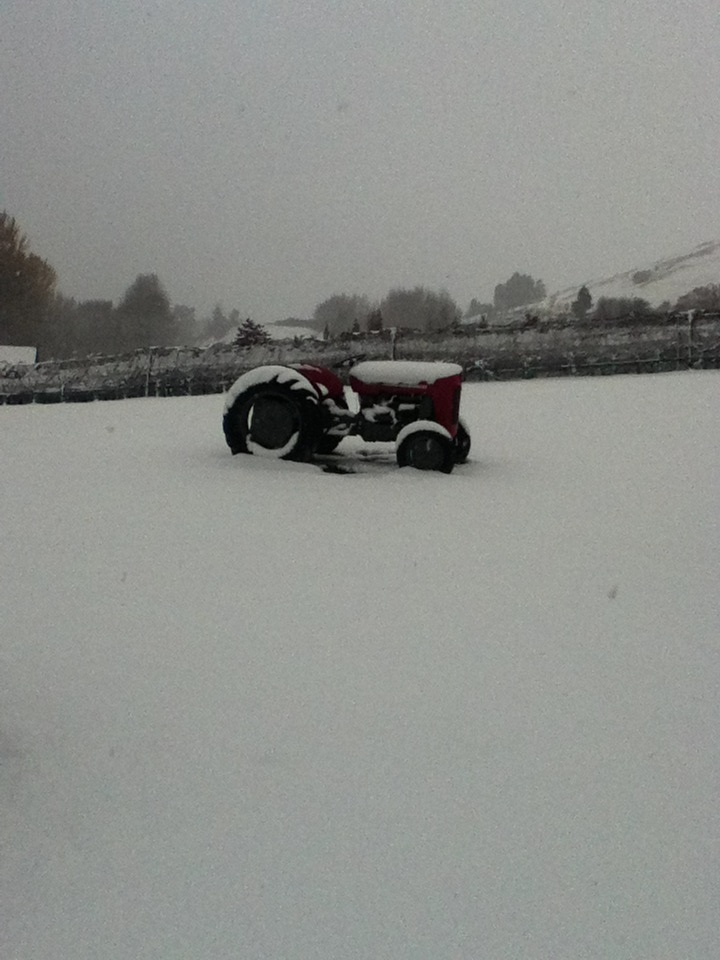 Snow worries, Amisfield has got a tractor!