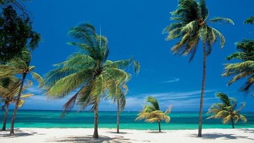 Reis Jorden Rundt med KILROY travels - Caribbean Vibes #palmtrees #beach #paradise #sand #ocean