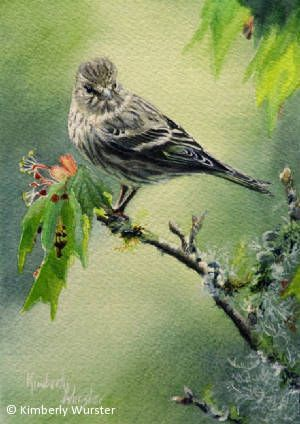 Pine Siskin by Kimberly Wurster Watercolor ~ 10 x 8