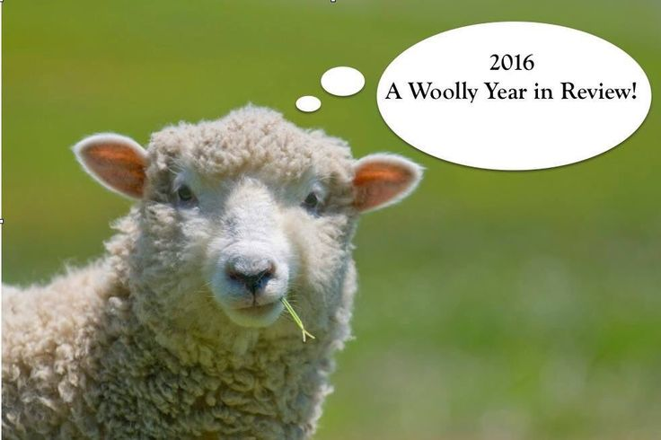 Woolly Hugs (@Woolly_Hugs) | Twitter