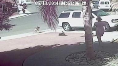 Cat Rescue: Family House Cat, Tara, Saved 4-year-old Jeremy From a Dog Attack ||| Video - ABC News