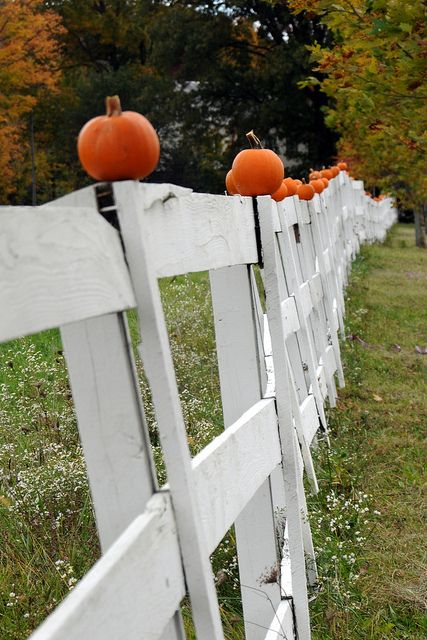 : Autumn Photos, Pumpkin Fence, Fall Time, Wooden Fence, White Fence, Fall Pumpkins, Fence Post, Halloween Fence, White Picket Fence