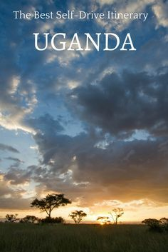 You may not have thought about going on safari in Uganda, but this amazing African country has it all. Gorillas, chimpanzees, elephants, rhinos, hippos, all for you to see and photograph! Click here to find out what the best road trip in Uganda itinerary is. #Africa #safari #gorilla #chimp