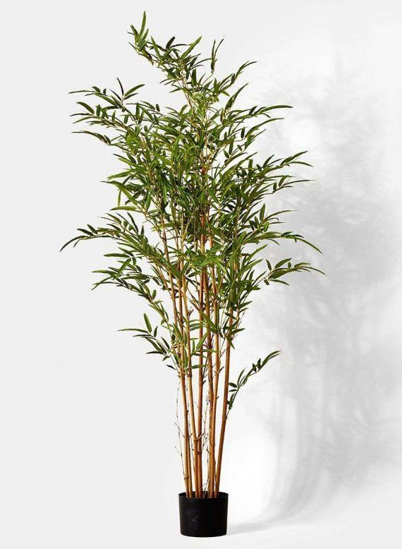 Beautiful B M Bamboo Plants Only On This Page Bamboo Plants Artificial Potted Plants Bamboo Tree