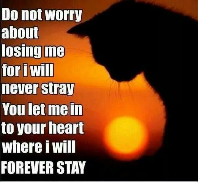 I will never stray. .. In your heart to stay. ... ♡