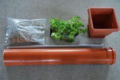 Salatbaum_Material