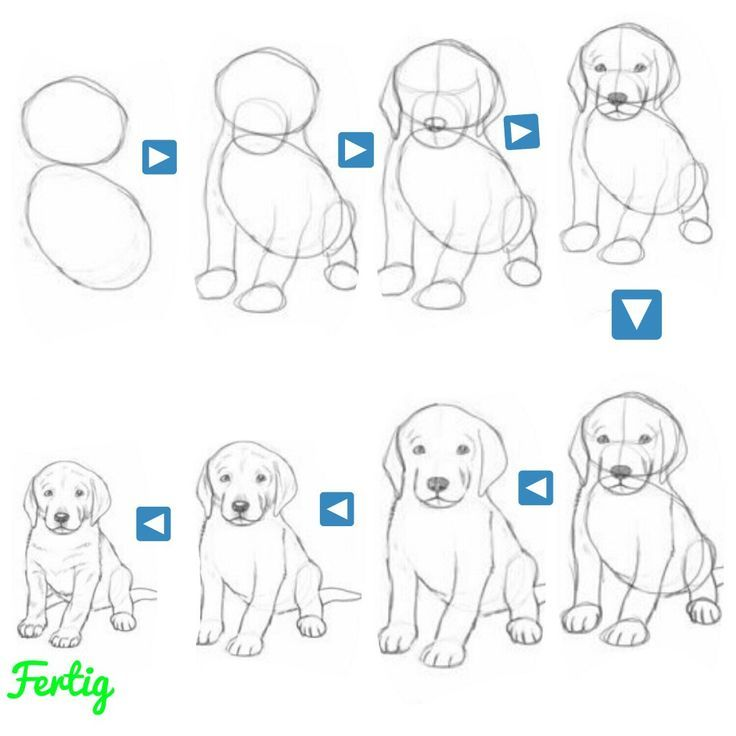 Malen Sie Einfach Einen Kleinen Hund Diy Tiere Malen
