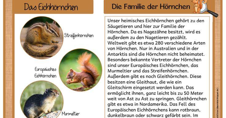 Wissenskartei_Eichhörnchen.pdf
