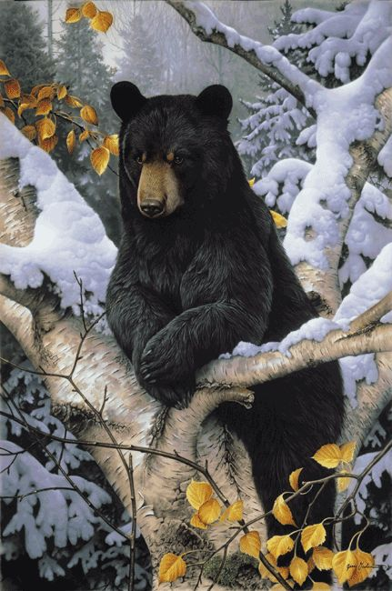 Black bear painting by wildlife artists Jerry Gadamus.  Just like Earl's card!   I'm framing it for the cabin!!           m