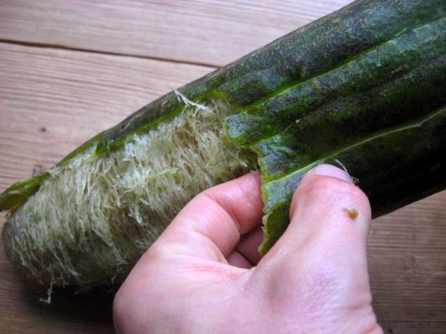 Making a Luffa Sponge @Becky Archibald ~ thanks friend! This is something I never knew. You knew I had to pin it, right? ...said Shelly