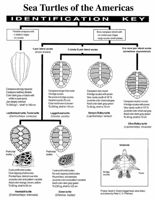 Turtle Diagram Quality Tools Electrical Wiring Diagrams