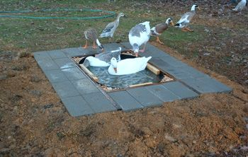 Build Your Own Ducks And Pools On Pinterest