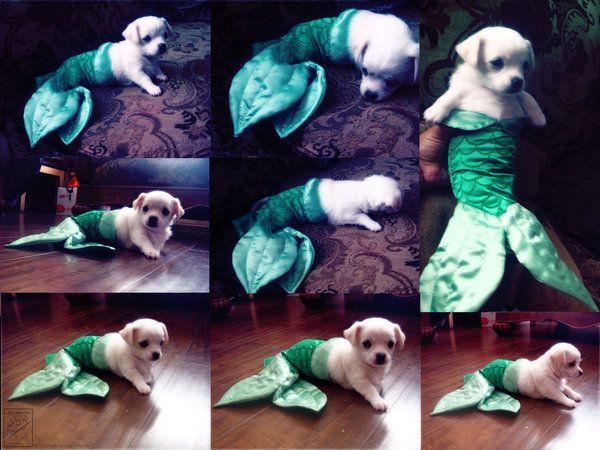 Mermaid pup.: Mermaids Puppies, Halloween Costumes, Dogs Costumes, Dogs Heavens, Mermaids Costumes, Mermaids Tail, Funny Puppies, The Little Mermaids, Animal