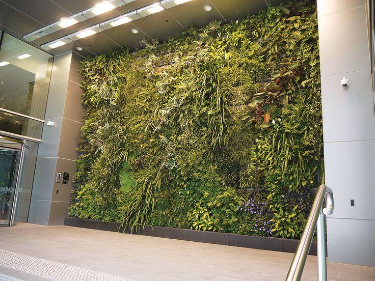 Semi external green wall, Melbourne