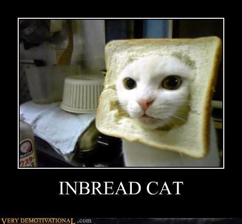 'Inbread' Cat