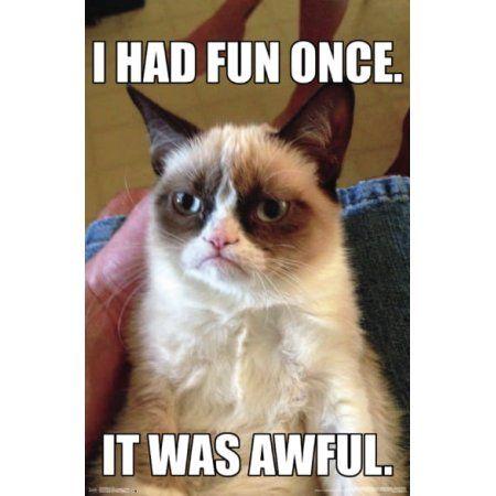 Grumpy Cat Grumpy Cat Quotes Grumpy Cat Humor Funny Grumpy Cat Memes