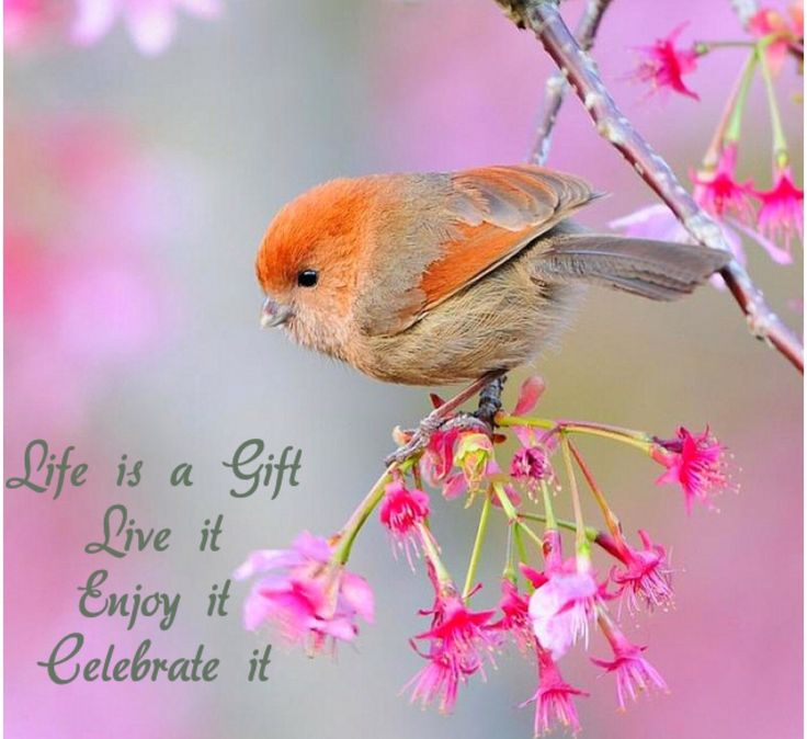 💞 Life is a Gift 💞