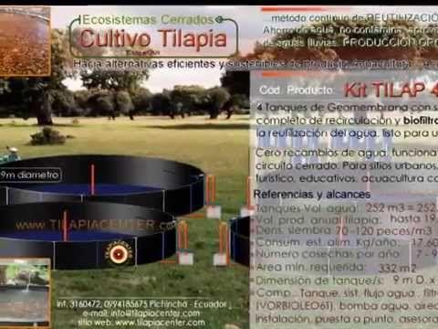 M s de 25 ideas incre bles sobre el cultivo de tilapia en for Criadero de camaron en estanques circulares