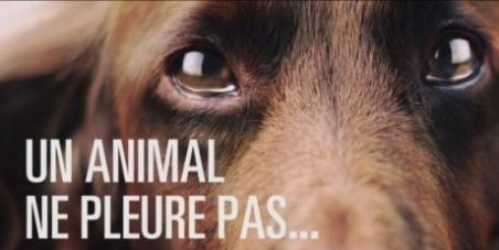 "France, awareness campaign via Media. Goal: responsible pet owners. France holds the ""record of animal euthanasia""  Responsabiliser les propriétaires d'animaux via les médias"