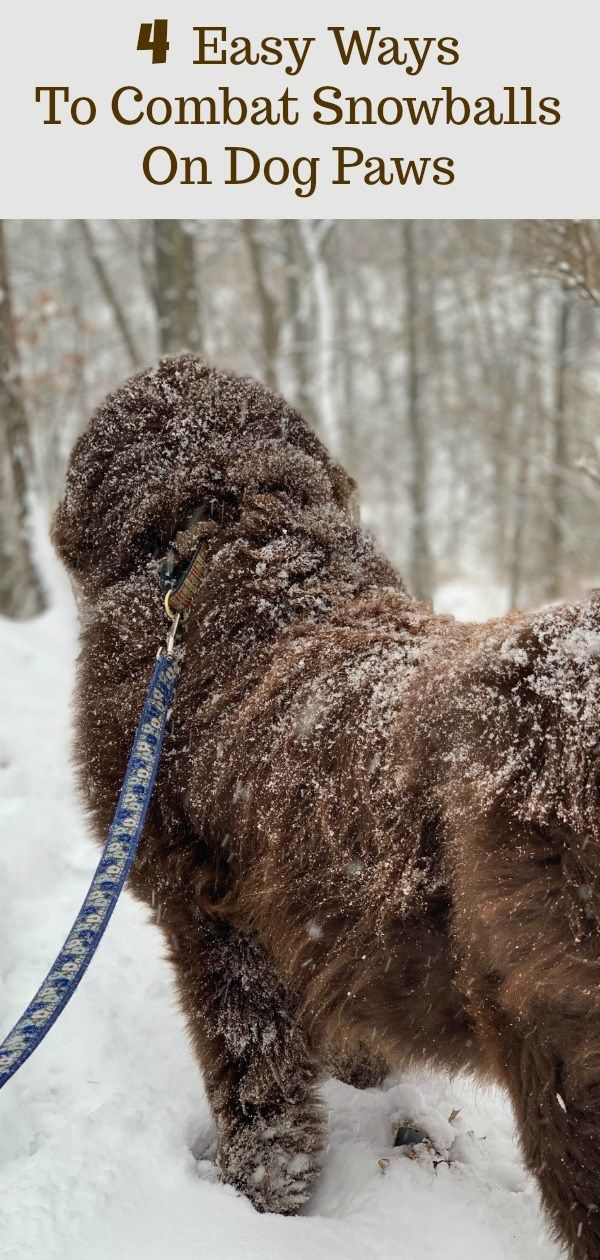 4 Ways To Combat Snowballs On Dog Paws Dog Paws Dogs Dog Grooming