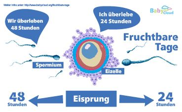 Fruchtbare Tage berechnen - Die Berechnung der Fruchtbaren Tage ist einfach. Alles dreht sich um den Eisprung. Du bist solange Fruchtbar wie die Eizelle und das Spermium überleben. Die Schwangerschaft bei Babycloud
