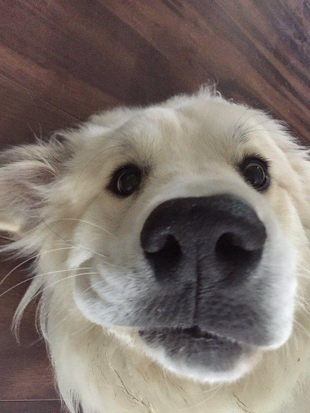 A flooferton who's into taking goofy selfies.