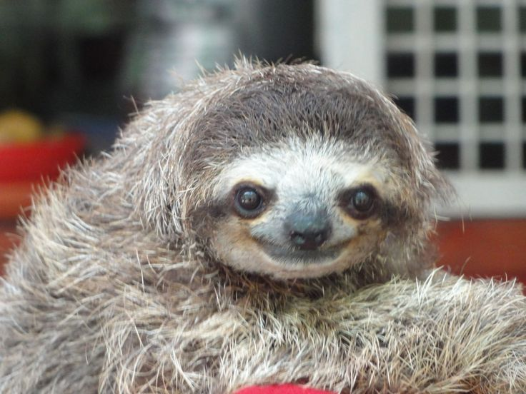 Mammal and sloths essay