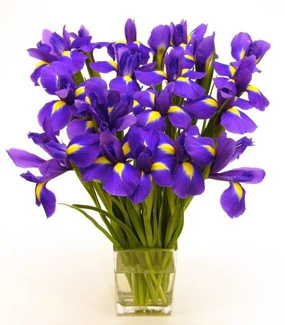 Imagen ramo de flores moradas  [4-3-16]