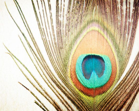 "Feather Photography - peacock photo nature fall - brown orange teal aqua beige - autumn - 8x10 Photograph, ""My Fine Feathered Friend"". $30.00, via Etsy."