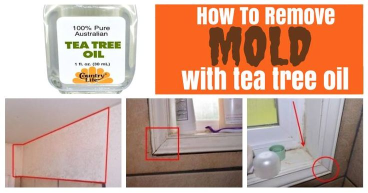 Tea Tree is considered a potent antifungal! We recently discovered a great mold-removal tutorial that makes use of tea tree essential oil and some household stuff like an old toothbrush, a scrub brush and sponge, towel or cloth. It is often suggested to use bleach or other chemicals - and while these may kill the mold, they can have adverse effects of their own.