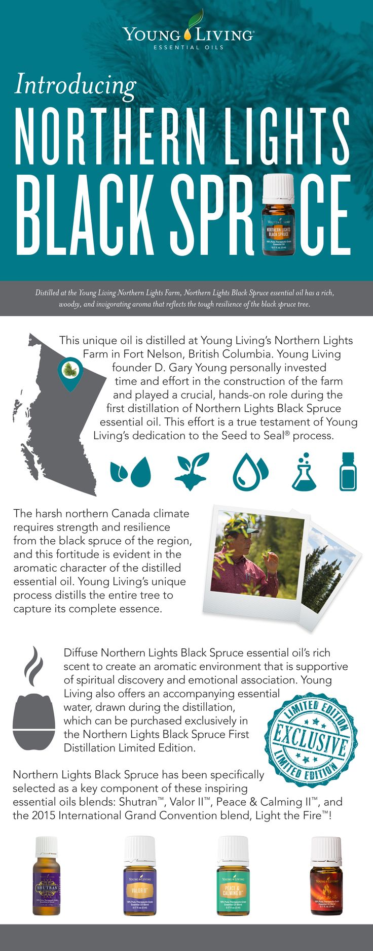 Spiritual Discovery and Emotional Oil Northern Lights Black Spruce is perfect for the diffuser during Yoga or Prayer