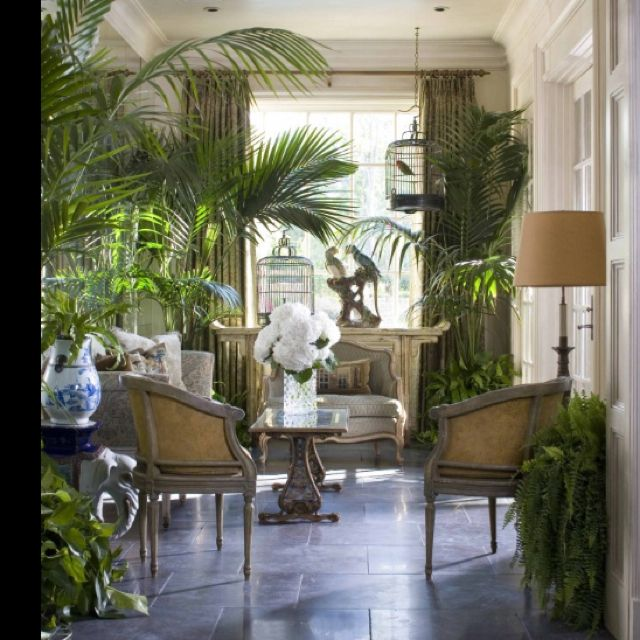Living Room Jungle 22 best my jungle room ideas images on pinterest | indoor plants
