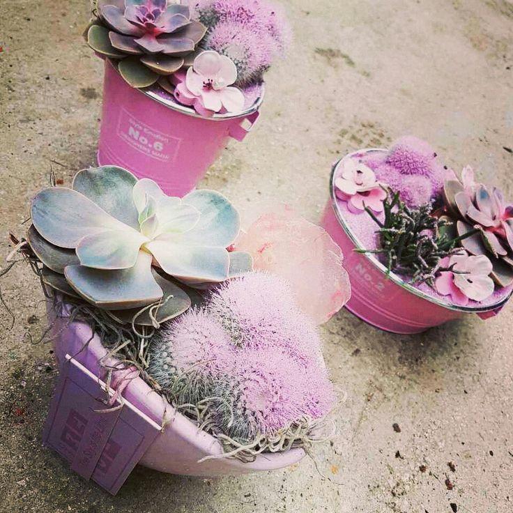 Όμορφα Παχύφυτα σε ροζ κασπω.  Αποστολή | λουλουδιων | ανθοπωλείο | online αγορές | μπουκέτα | anthemionflowers.gr | ανθοπωλείο