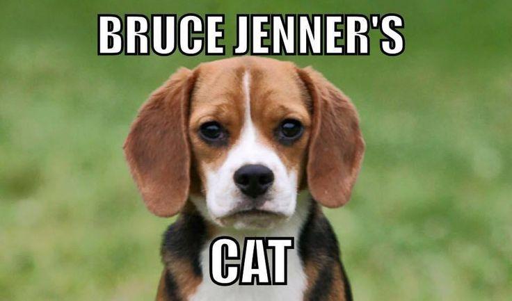 bruce jenners cat.jpg