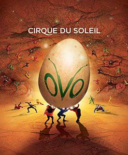 OVO | Spectacle de tournée | Cirque du Soleil