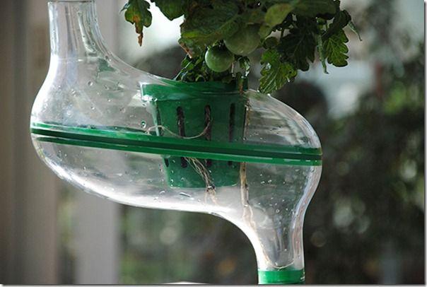 Future technology Concept Hydroponic plant PlanTree