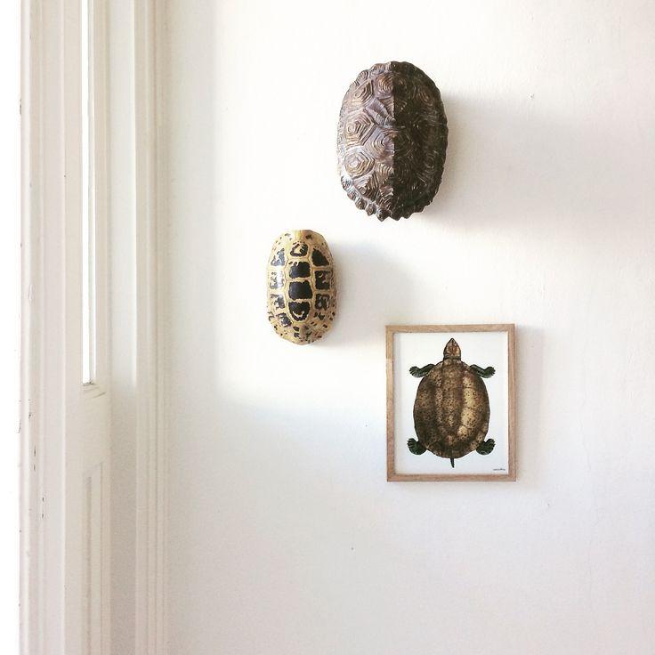 Turtle Lovers | Image via Instagram @laifennuver