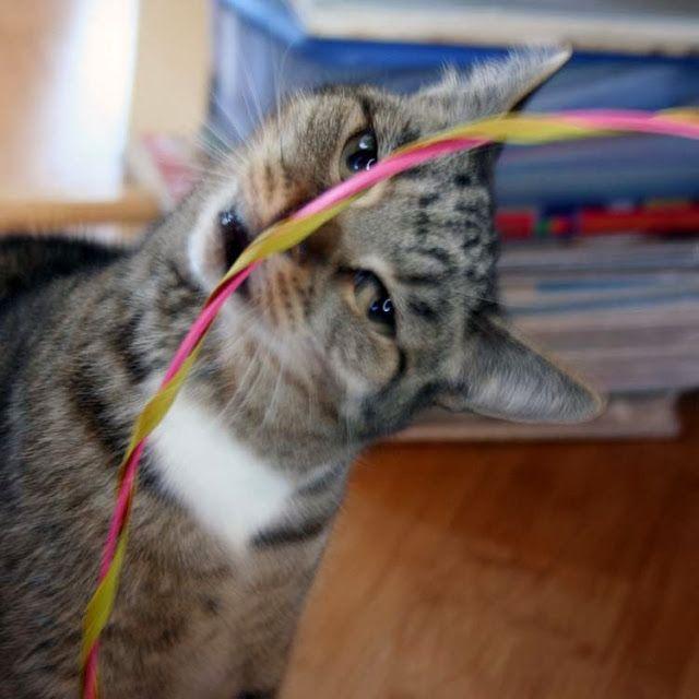Stinky the Farm cat meows about Senior Cat Food #HillsPet #spon