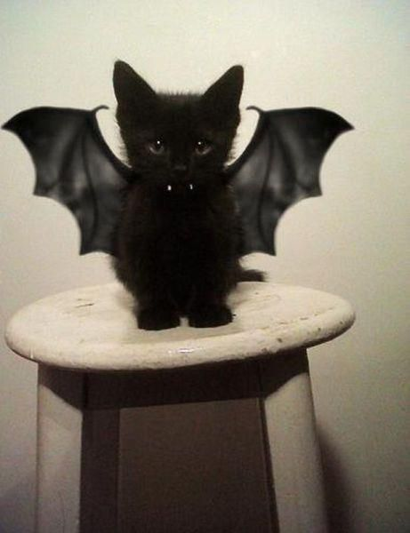 bat cat. I wish my black cat would tolerate wings like that....