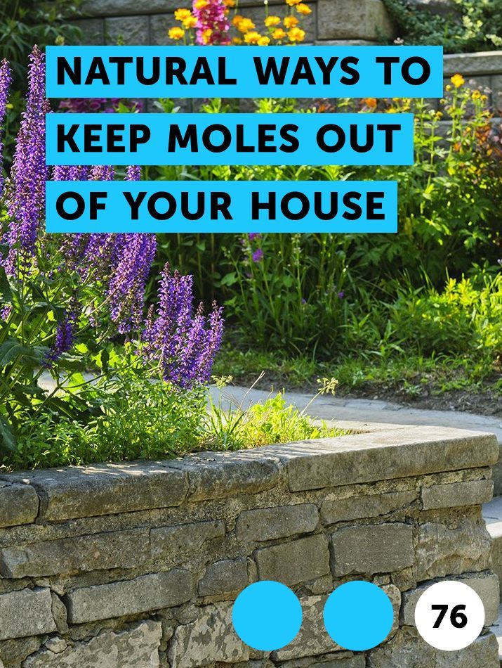 Learn Natural Ways To Keep Moles Out Of Your House How To Guides Tips And Tricks Mulch Plants What Is Cedar