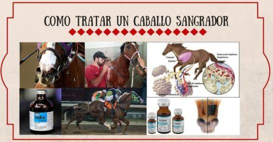 Como tratar un Caballo Sangrador Blog AQHA aqha en español caballos cuarto de milla como tratar un caballo sangrador cuidados veterinarios para caballos cuarto de milla lasix caballo sangrador salix caballo sangrador StallionMexSearch uso de furosemida en caballos