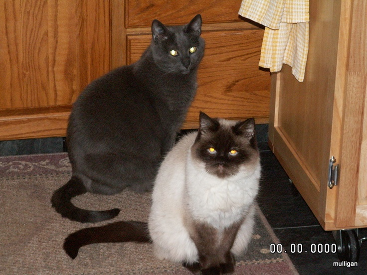 Nissa and Blackie
